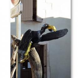 """Oiseau bleu noir jaune"" Fabien GRENIER"